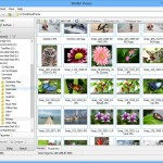 WildBit Viewer 6.2: An Image Processor To View, Edit And Search Images